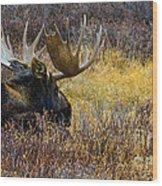 Resting Moose Wood Print