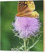 Resting On A Thistle Wood Print