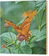 Resting Orange Butterfly Wood Print