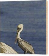Resting Pelican Wood Print