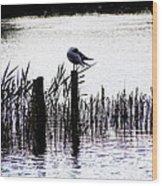 Resting Seagull  Wood Print