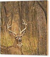 Resting White-tailed Deer Buck Wood Print