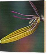 Restrepias Orchid Wood Print