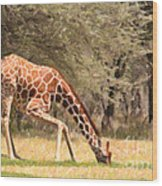 Reticulated Giraffe Drinking At Waterhole Kenya Wood Print