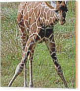 Reticulated Giraffe Wood Print