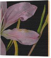 Retiring Lily Wood Print
