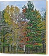Retreating Pines Wood Print