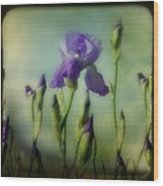 Retro Iris Metting Wood Print