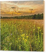 Retzer Wildflower Sunset Wood Print