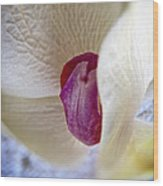 Revealing The Heart Of An Orchid Wood Print