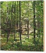Wooded Path 13 Wood Print