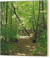 Wooded Path 17 Wood Print
