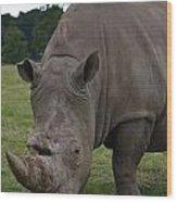 Rhino 2 Wood Print