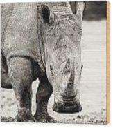 Rhino After The Rain Wood Print by Mike Gaudaur