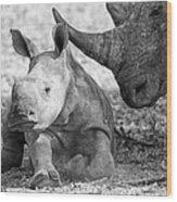 Rhino And Baby Wood Print