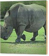 Rhino And Friend Wood Print