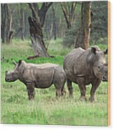 Rhino Family Wood Print