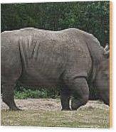 Rhino In The Wild Wood Print