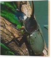 Rhinoceros Beetle Wood Print