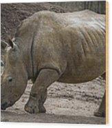 Rhinoceros Wood Print