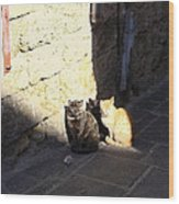 Rhodes Cat Trio Wood Print