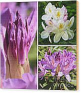 Rhododendron Collage Wood Print