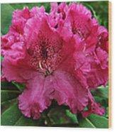 Rhododendron ' Bessie Howells ' Wood Print