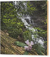 Rhododendron At The Falls Wood Print