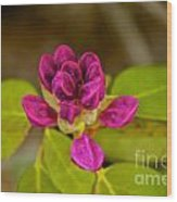 Rhododendron Bud Wood Print