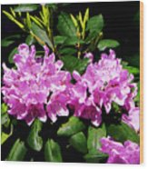 Rhododendron Closeup Wood Print