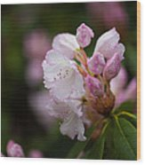 Rhododendron Enborne Wood Print