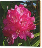 Rhododendron Glow Wood Print