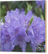 Rhododendron Impeditum Wood Print