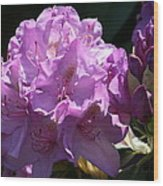Rhododendron In The Morning Light Wood Print