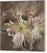 Rhododendron Mary Fleming Wood Print