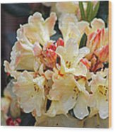 Rhododendron Nancy Evans Wood Print