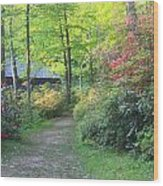 Rhododendron Path In Evening Light Wood Print