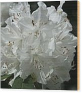 Rhododendron Purity Wood Print