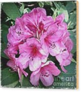 Rhododendron Square With Border Wood Print