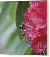 Rhododendron With Bumblebee Wood Print by Frank Tschakert