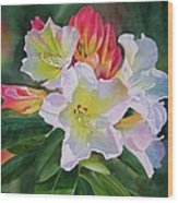 Rhododendron With Red Buds Wood Print