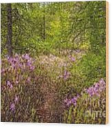 Rhodora Bloom In Acadia Wood Print
