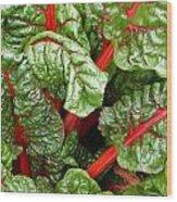 Rhubarb Abstract Wood Print
