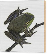 Ribbeting Frog In A Bucket Wood Print