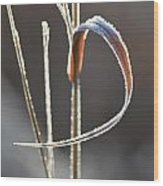 Ribbon Of Frost Wood Print
