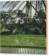 Rice Fields Bali Wood Print by Juergen Weiss