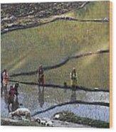 Rice Fields Wood Print