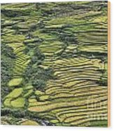 Rice Fields Sapa II Wood Print