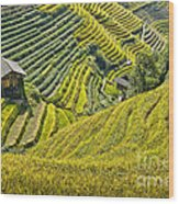 Rice Fields Terraces Wood Print