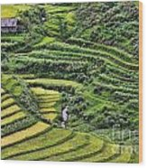 Rice Fields Vietnam Wood Print